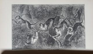 My Apingi Kingdom: with Life in the Great Sahara, and Sketches of the Chase of the Ostrich, Hyena, &c.