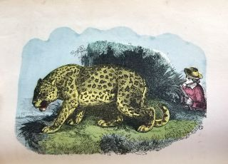 The Hunters of the World; or, Wild Sports and Adventures in Encounters with Wild Animals in Every Part of the World. [with] Travellers' Adventures in All Countries. Abridged from the Best Writers for Young Persons.